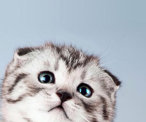 animals, cat, and cute image
