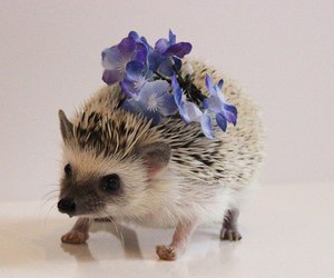 animal, flowers, and plants image