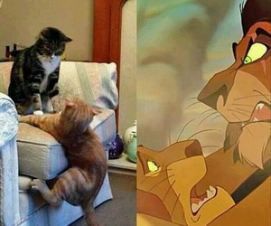 funny, cat, and disney image