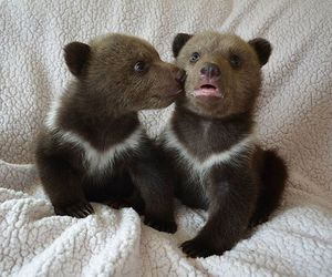 baby animals, bear, and cute animals image