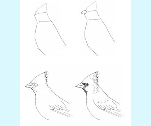 draw, instruction, and drawing image
