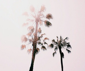 palm trees, tree, and pink image
