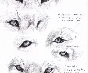wolf, drawing, and eyes image