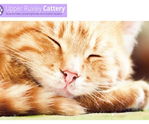 catteries in sidcup, cattery bexley, and cattery dartford image