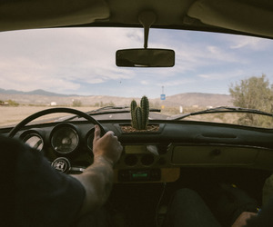 cactus, guy, and car image