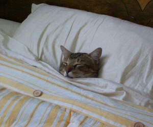 cat, sleep, and animal image