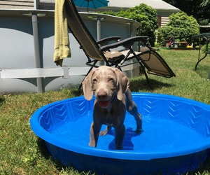 happy, puppy, and swimming image