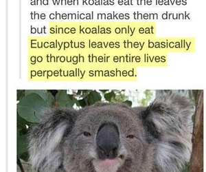 animals, funny, and tumblr image