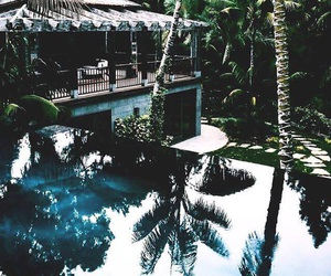 summer, palms, and pool image