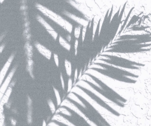 shadow, plants, and summer image