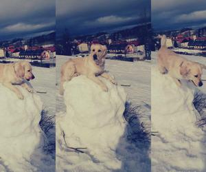 april, golden retriever, and winter image