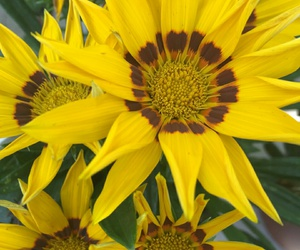 amarillo, flores, and yellow image