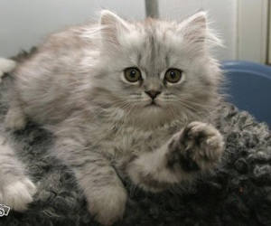 adorable, adorable kitty, and cat image