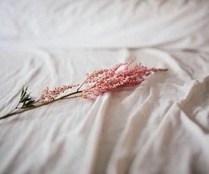 flowers, bed, and pink image