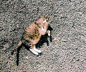 alone, animals, and cat image