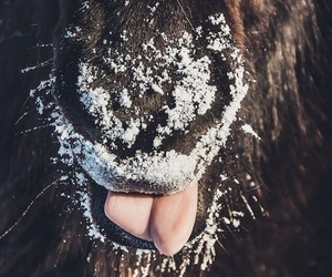 horse, snow, and tongue image