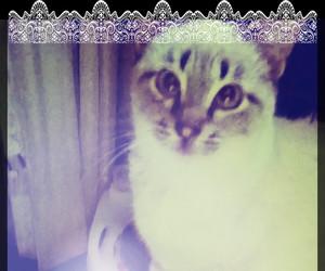 awn, beautiful, and cat image