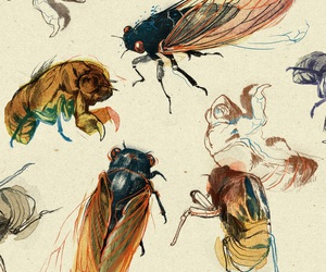art, insect, and bugs image