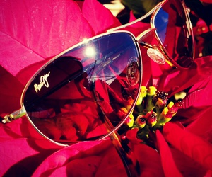 flower, poinsettia, and sunglasses image