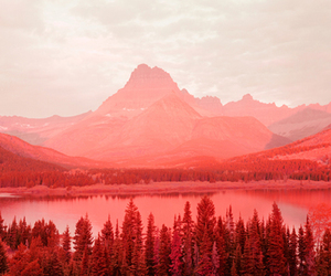 nature, photography, and red image