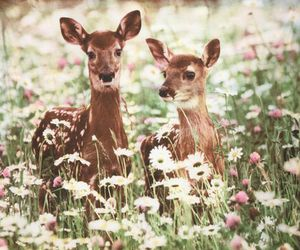 beautiful, white, and deer image