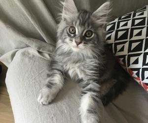 adorable, baby, and chaton image