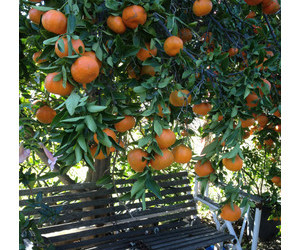 citrus, italy, and summer image