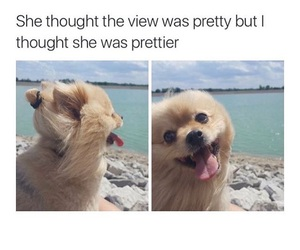 dog, cute, and view image