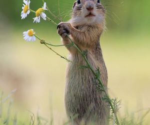 We call this sweet lil' one, a Ground Squirel or Prarie Dog..  yet, i just wanna call them, Adorable! ox