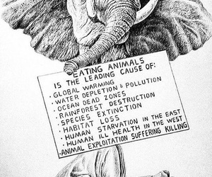 animal, vegan, and earth image