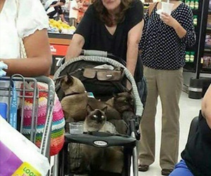 cats, animals, and cat lady image