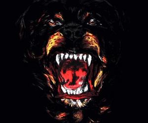 Givenchy and dog image