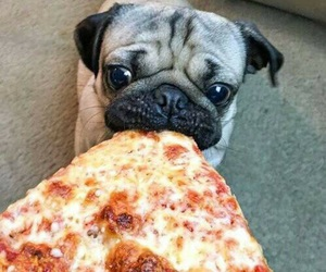 pizza, pug, and dog image