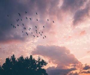 birds, pink, and sunset image