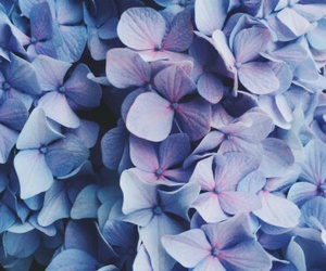 background, floral, and lilac image
