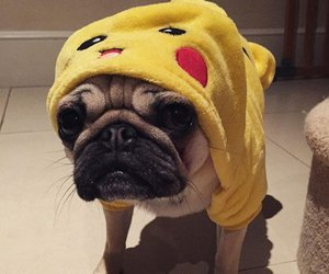 animals, dogs, and costume image