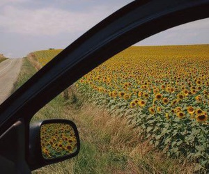 sunflower, flowers, and car image