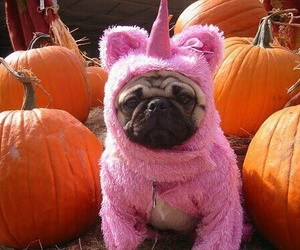 unicorn, dog, and pug image