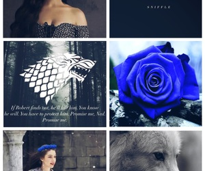 stark, wolves, and blue roses image