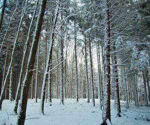 invierno and nieve image