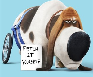 the secret life of pets, movie, and pets image