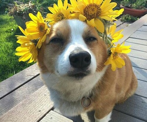dog, flowers, and animal image