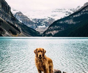 dog, beautiful, and mountains image
