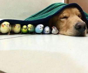 bird, dog, and cute image