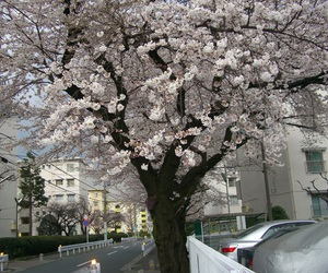 tree, flowers, and japan image