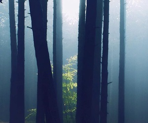 forest, background, and photography image