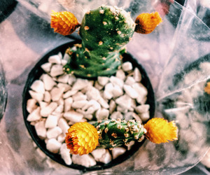 amazing, cactus, and cool image