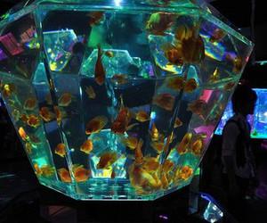 fish, beautiful, and aquarium image