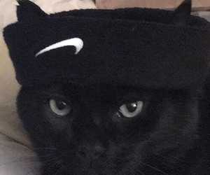 nike, black, and cat image