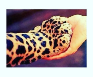 animals, tiger, and hand image
